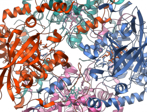 Repeticiones en proteínas: una clave para comprender el comportamiento de la naturaleza